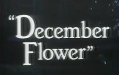 December Flower (1979) Title Card